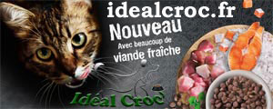 crquettes chat